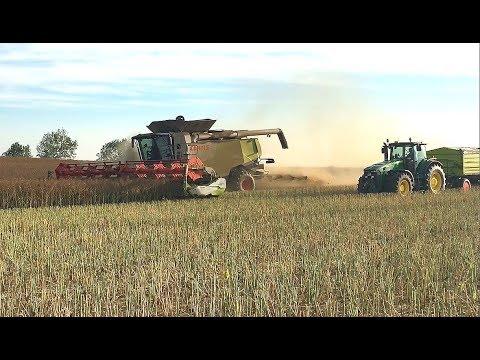 Getreideernte 2018 •Rapsernte 2018 •Harvest 2018 •Moisson 2018 • 2 Claas Lexion 770 • John Deere 1/2